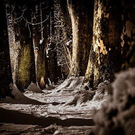 by Jadran Korać - Nature Up Close Trees & Bushes