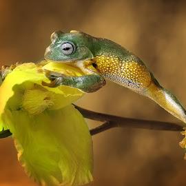 Reach by Muhammad Ridha - Animals Amphibians