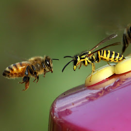 Stand Off by Bruce Arnold - Animals Insects & Spiders (  )