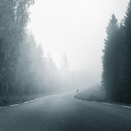 Foggy scene by Christian Trustrup - Landscapes Weather ( person, tree, fog, cloudy, trees, weather, forest, road )