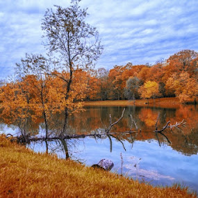 Golden Fall. by Gene Brumer - Landscapes Forests ( clouds, water, sky, autumn, fall, leaf, pond, golden )