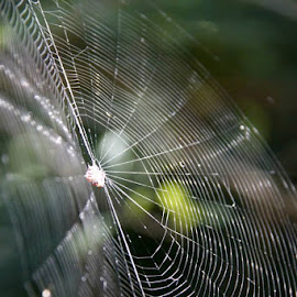 by Simone Ritson - Nature Up Close Webs