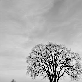 Lone Tree Silhouette by Kevin Pastores - City,  Street & Park  Street Scenes ( b&w, tree, silhouette, sad, street, white, quiet, road, alone, black, country )