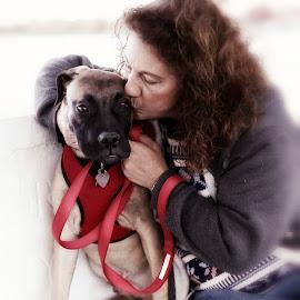 Rocky and Carleen by Greg Bracco - Animals - Dogs Portraits ( breed, bullmastiff, dogs, greg bracco, pet, pets, american kennel club, bullmastiffs, akc, dog, purebread )