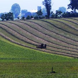 Harvesting the field by Jennifer Durham - Landscapes Prairies, Meadows & Fields ( farm, plowing, crops, harvest, fields )
