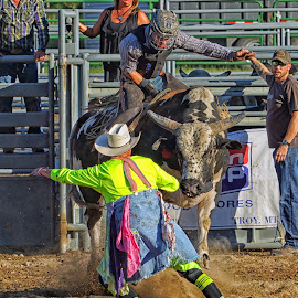 Clowning Around with a Bull by Twin Wranglers Baker - Sports & Fitness Rodeo/Bull Riding ( bull fighter, clown, rodeo clown, rodeo, bull riding,  )
