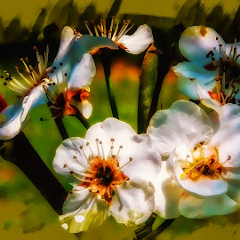 Bradford Pear  by Dave Walters - Flowers Flowers in the Wild ( flowers, nature, tranquil, bradford pear, colors, digital art, metatation )