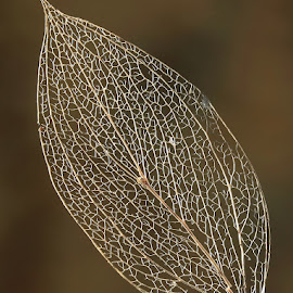 by Boris Buric - Nature Up Close Leaves & Grasses