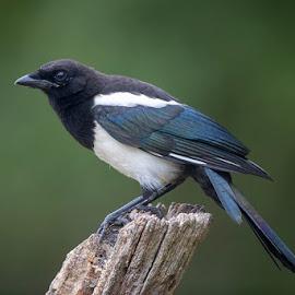 by Denis Keith - Animals Birds