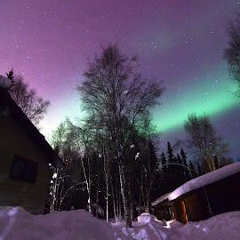 Home At Last by Rebecca Weatherford - City,  Street & Park  Night ( sky, stars, alaska, northern lights, aurora borealis, aurora, path, night, nikon )