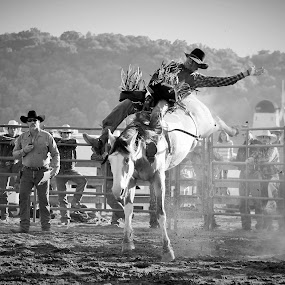 Bareback'N It  by Brian  Shoemaker  - Black & White Sports ( cowboy, black and white, rodeo, bronc, roughstock,  )