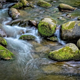 Moss on the Water by Gregg Rich - Nature Up Close Rock & Stone ( water, rockes, stream, nature, moss )