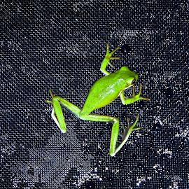 by Basia Lewandowski - Animals Amphibians