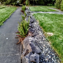 Path Less Traveled by Carlo McCoy - Instagram & Mobile Android
