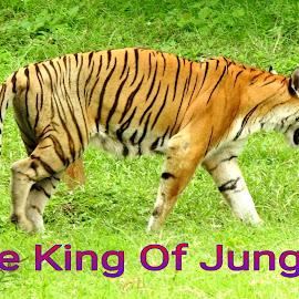 The King by SANGEETA MENA  - Typography Quotes & Sentences