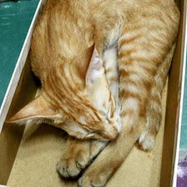 sleep tight by Ign Hadi - Animals - Cats Portraits