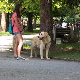 Разходка by Georgi Kolev - Animals - Dogs Portraits ( слънце., сенки., куче., хора., парк., дървета. )