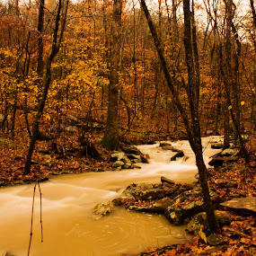 Creek at Flood by Jamie Newton - Landscapes Waterscapes ( orange, color, creek, brown, ozarks, arkansas )