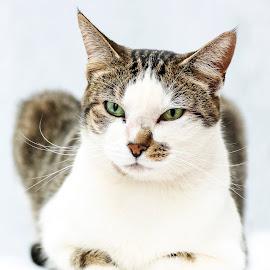 Hurry up mom.. by Susan Pretorius - Animals - Cats Portraits