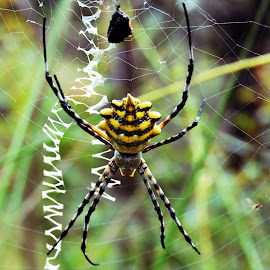 by Karin De Leeuw Luck - Animals Insects & Spiders (  )