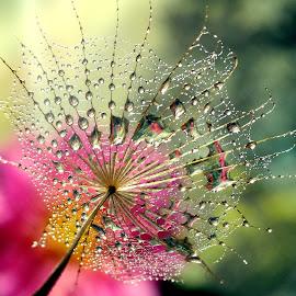 by Biljana Nikolic - Nature Up Close Other plants