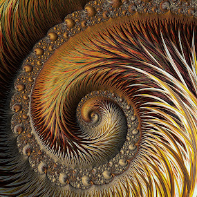 Gold Feather by Amanda Moore - Illustration Abstract & Patterns ( digital art, fractal art, spiral, fractal, digital, fractals )