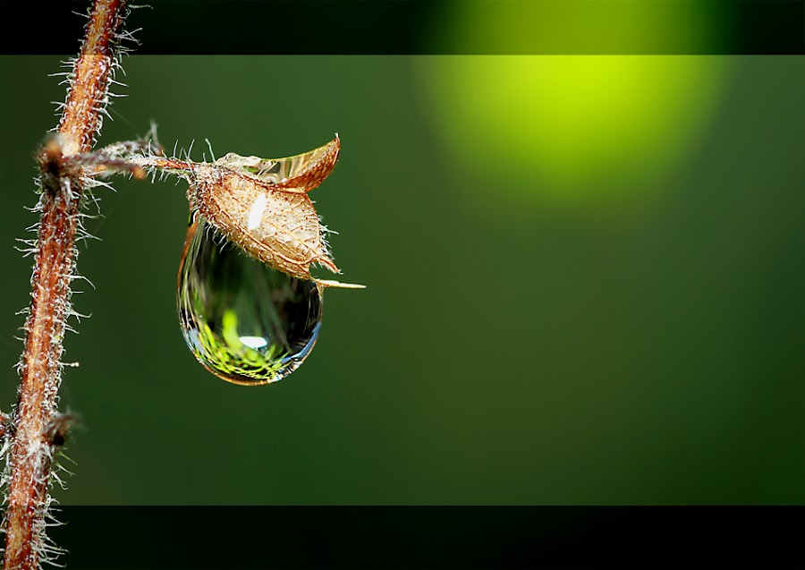 FRUIT OF DEW by Bambang Charli - Nature Up Close Water