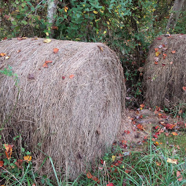 old bales of hay in field by Anne Mangen - Nature Up Close Leaves & Grasses