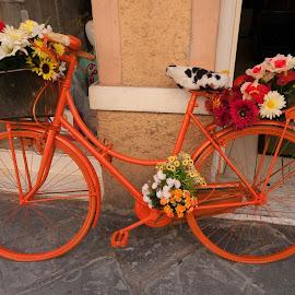 orange bike by Mario Bistoni - Transportation Bicycles ( orange, bike, street, grey, flowers,  )