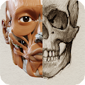 App 3D Anatomy for the Artist APK for Windows Phone