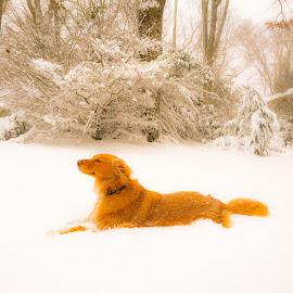 Tessa by Jose Reina - Animals - Dogs Portraits