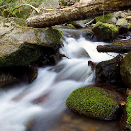 by Siniša Almaši - Nature Up Close Water ( water, stream, nature, colors, white, trees, stone, forest, view, rocks, river )