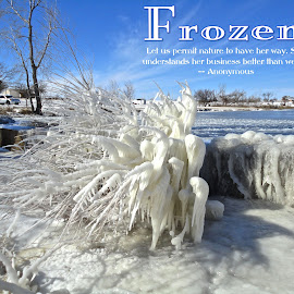 Frozen by Kathy Suttles - Typography Quotes & Sentences ( inspiration, blue, ice, white, lake, weeds, frozen, iced over )