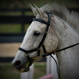 by Kym George - Animals Horses