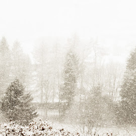 Winter Scene!! by Sharon Carse - Landscapes Weather