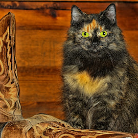 Guarding of the Boots by Twin Wranglers Baker - Animals - Cats Portraits (  )