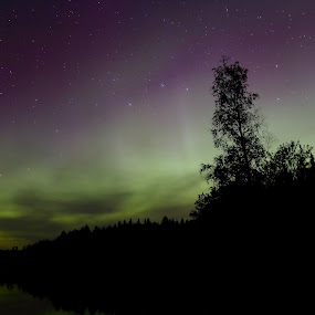 Northern Lights by Sami Rahkonen - Landscapes Starscapes ( sweden, sky, nature, tree, colors, northern lights, aurora, trees, astrophotography, northern light, landscape, starscape )