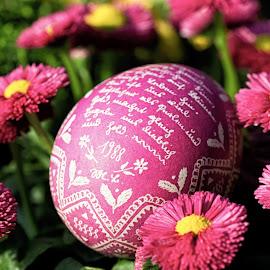 Pink - 2011 by Thomas Hertz - City,  Street & Park  City Parks ( easter egg, kleve, easter, green, 1988, pink, flowers, garden )
