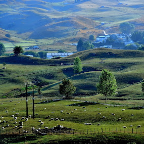 Meadows Sunrise by Tomasz Budziak - Landscapes Prairies, Meadows & Fields ( green, meadows, landscapes, new zealand,  )