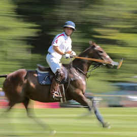 Polo! by Judy Laliberte - Novices Only Sports ( rider, green, bown, horse, action, polo )
