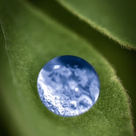 Blue marble by Mitch Tranmer - Nature Up Close Natural Waterdrops ( nature, earth, nebraska, leaf, water )