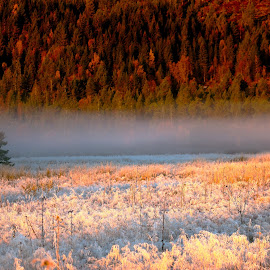 Fog in a sunny cold morning by Roald Heirsaunet - Landscapes Forests