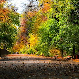 october by Cornelius D - City,  Street & Park  City Parks