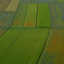 Castelluccio 23 by Bruno Brunetti - Landscapes Prairies, Meadows & Fields ( nature, colors, flowers, castelluccio, fields )