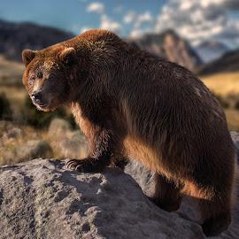 by James Harrison - Digital Art Animals