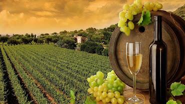 Wine Regions of France