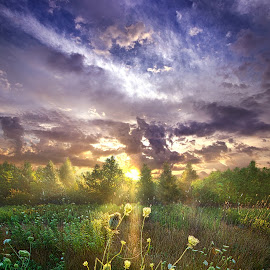 And In The Naked Light I Saw by Phil Koch - Landscapes Sunsets & Sunrises ( clouds, summer, travel )