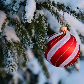 by Eugenija Seinauskiene - Public Holidays Christmas