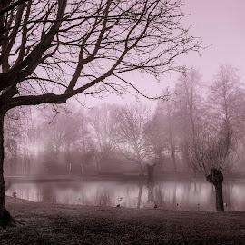 The melancholic evening fog by Shirshendu Sengupta - Landscapes Prairies, Meadows & Fields ( via krupp, waterland, relax, afternoon, lake, travel, landscape, netherlands, island, mountains, nature, fog, capri, holland, cloud, switzerland, broek, night, evening, italy, jungfrau, mist, tranquil, relaxing, tranquility )