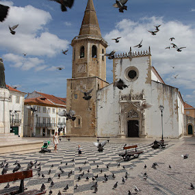 by Bim Bom - Buildings & Architecture Places of Worship ( portugal tomar square pigeons birds staue square church fly checker )